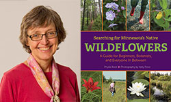 Phyllis Root Wildflowers book release 250